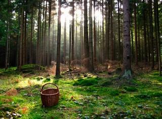Чтобы не потеряться в лесу